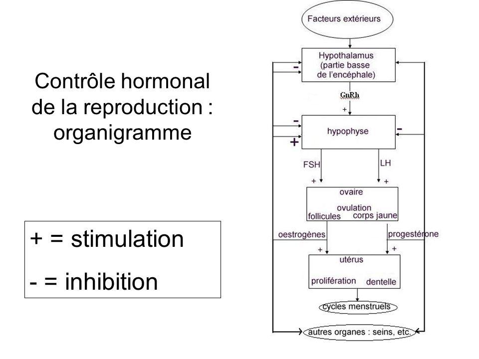 Contrôle hormonal de la reproduction : organigramme + = stimulation - = inhibition