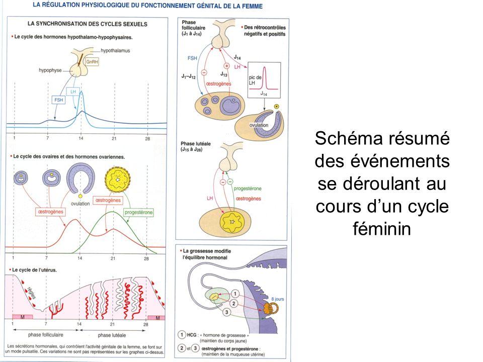 Schéma résumé des événements se déroulant au cours dun cycle féminin