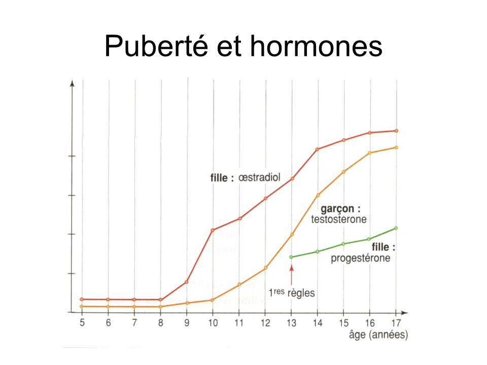 Puberté et hormones