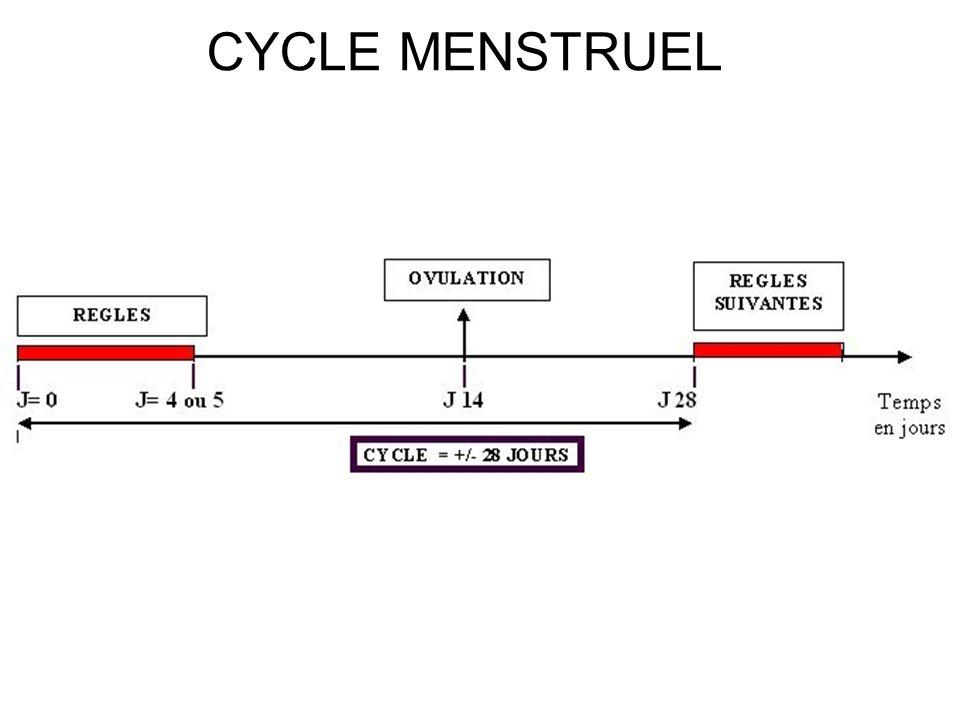 UTERUS M = myomètre = muscle creux, développé, responsable des contractions utérines au mt de l accouchement ; E = endomètre +/- développé selon le cas ; L = cavité utérine ou lumière où se développe le fœtus (si grossesse !).