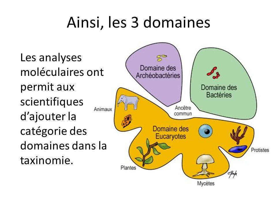 Ainsi, les 3 domaines Les analyses moléculaires ont permit aux scientifiques dajouter la catégorie des domaines dans la taxinomie.