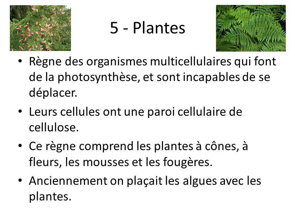 5 - Plantes Règne des organismes multicellulaires qui font de la photosynthèse, et sont incapables de se déplacer. Leurs cellules ont une paroi cellul