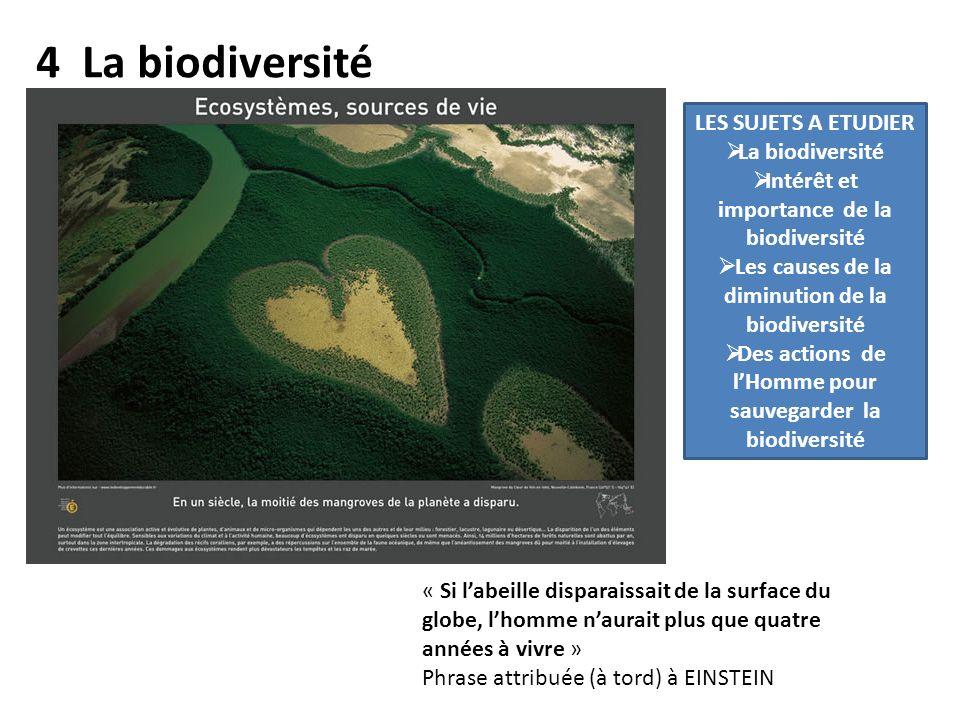 4 La biodiversité LES SUJETS A ETUDIER La biodiversité Intérêt et importance de la biodiversité Les causes de la diminution de la biodiversité Des actions de lHomme pour sauvegarder la biodiversité « Si labeille disparaissait de la surface du globe, lhomme naurait plus que quatre années à vivre » Phrase attribuée (à tord) à EINSTEIN