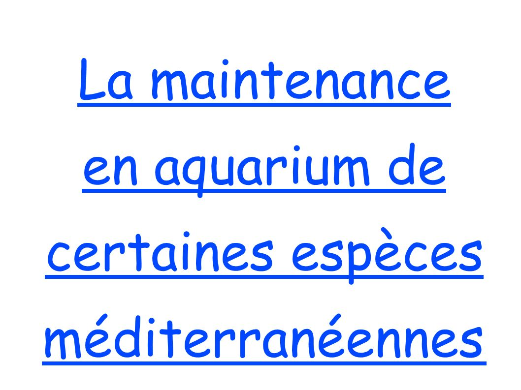 La maintenance en aquarium de certaines espèces méditerranéennes