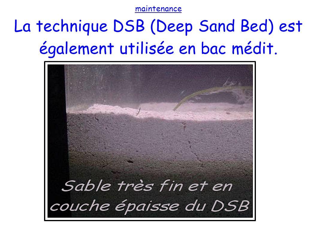 maintenance La technique DSB (Deep Sand Bed) est également utilisée en bac médit.