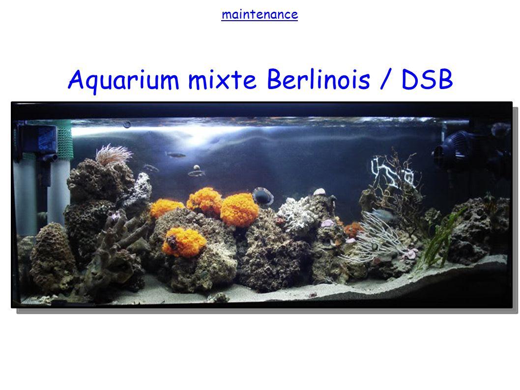 maintenance Aquarium mixte Berlinois / DSB