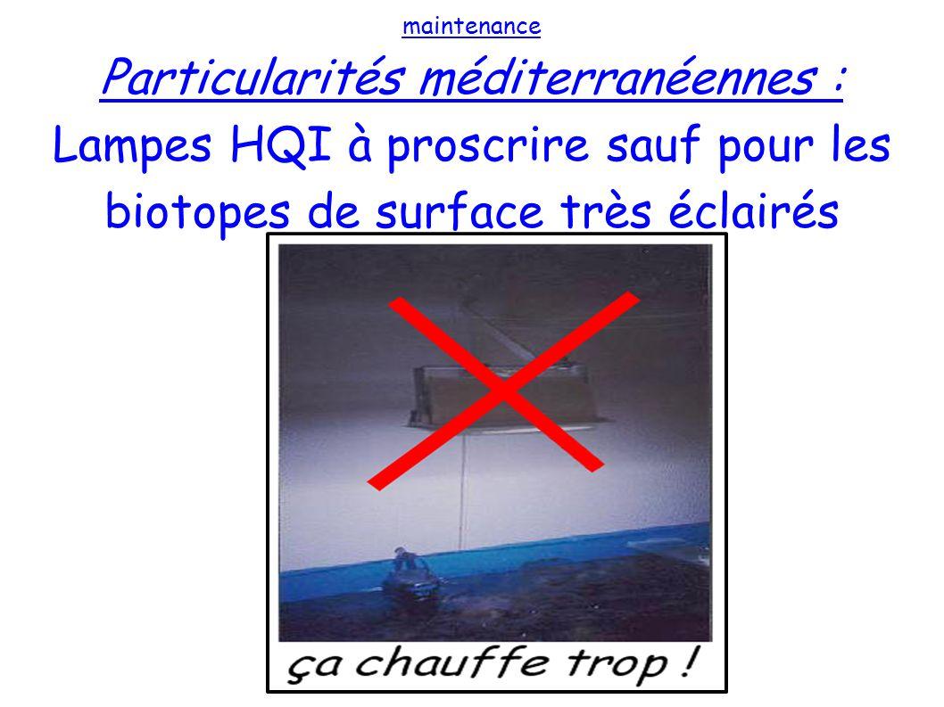 maintenance Particularités méditerranéennes : Lampes HQI à proscrire sauf pour les biotopes de surface très éclairés