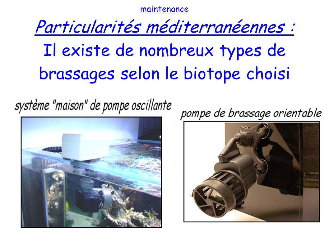 maintenance Particularités méditerranéennes : Il existe de nombreux types de brassages selon le biotope choisi