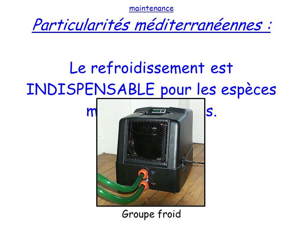 maintenance Particularités méditerranéennes : Le refroidissement est INDISPENSABLE pour les espèces méditerranéennes. Groupe froid
