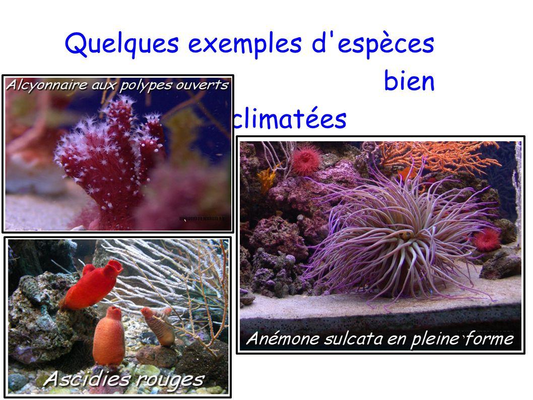 Quelques exemples d'espèces bien acclimatées