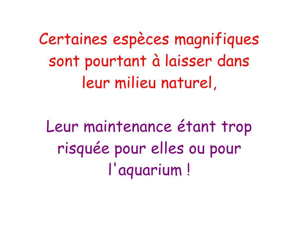 Certaines espèces magnifiques sont pourtant à laisser dans leur milieu naturel, Leur maintenance étant trop risquée pour elles ou pour l'aquarium !