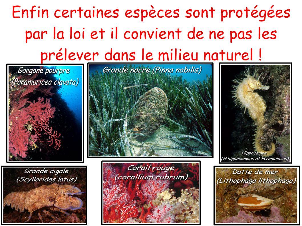 Enfin certaines espèces sont protégées par la loi et il convient de ne pas les prélever dans le milieu naturel !