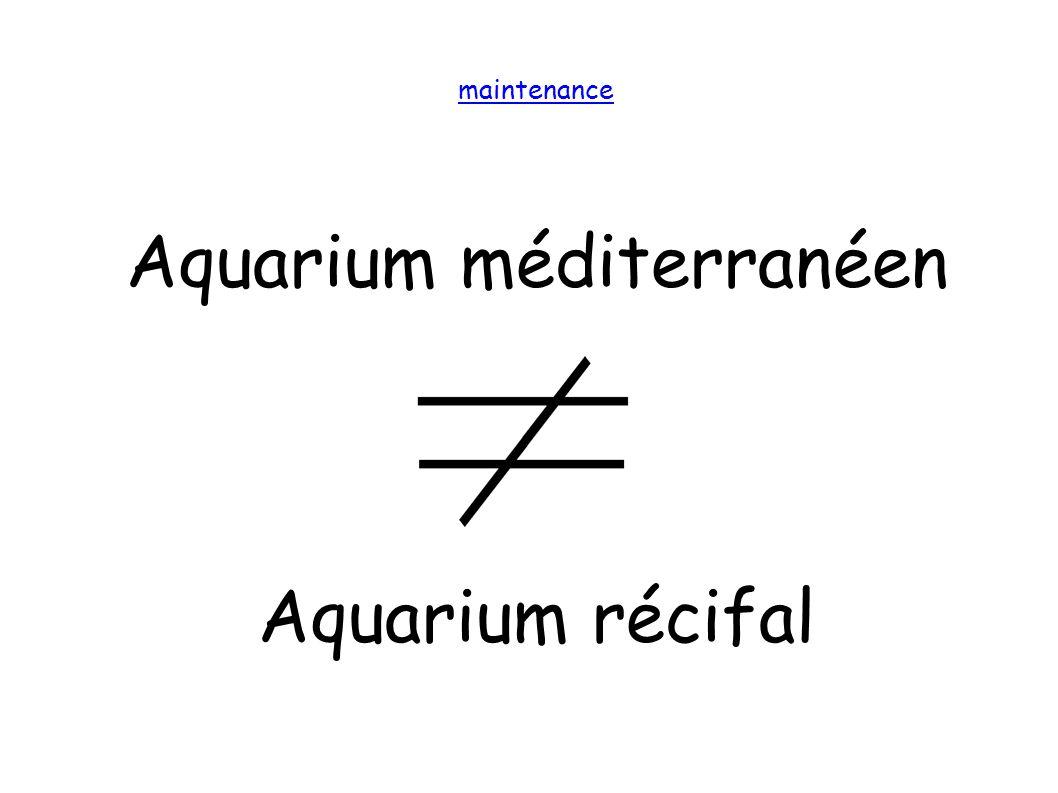 maintenance Aquarium méditerranéen Aquarium récifal