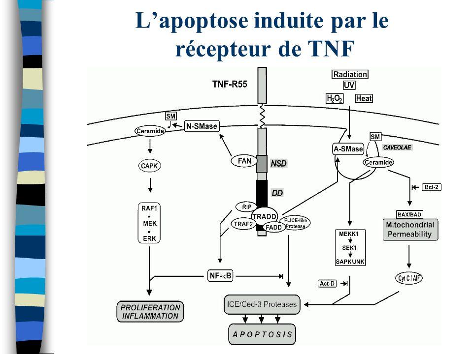 Lapoptose induite par le récepteur de TNF