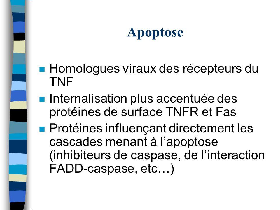 Apoptose n Homologues viraux des récepteurs du TNF n Internalisation plus accentuée des protéines de surface TNFR et Fas n Protéines influençant direc