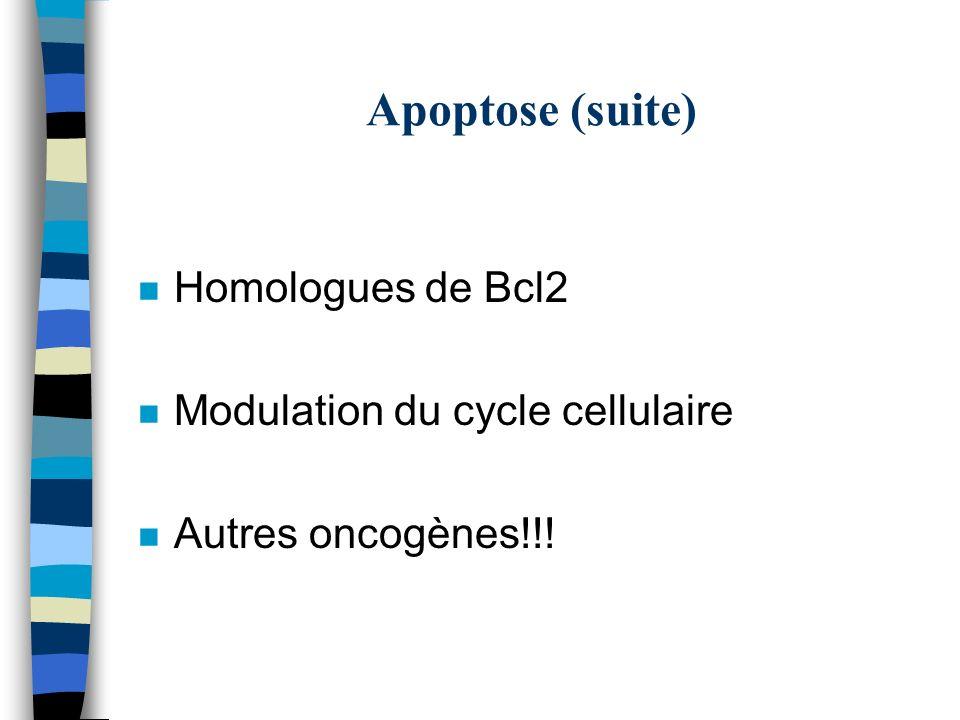 Apoptose (suite) n Homologues de Bcl2 n Modulation du cycle cellulaire n Autres oncogènes!!!