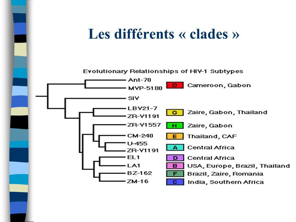 Les différents « clades »