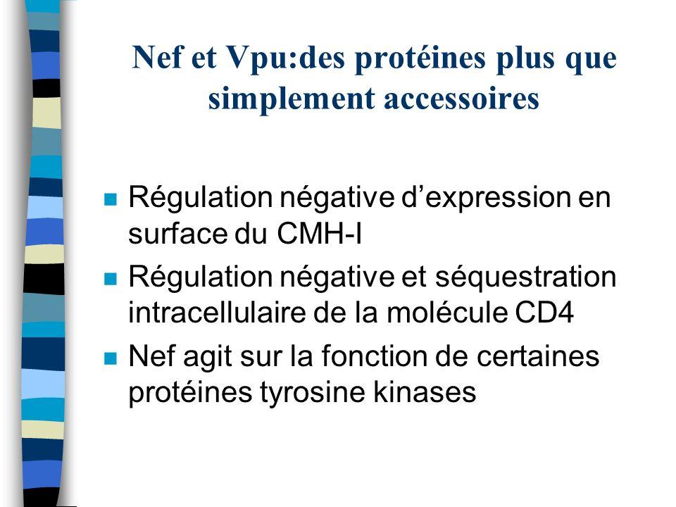 Nef et Vpu:des protéines plus que simplement accessoires n Régulation négative dexpression en surface du CMH-I n Régulation négative et séquestration