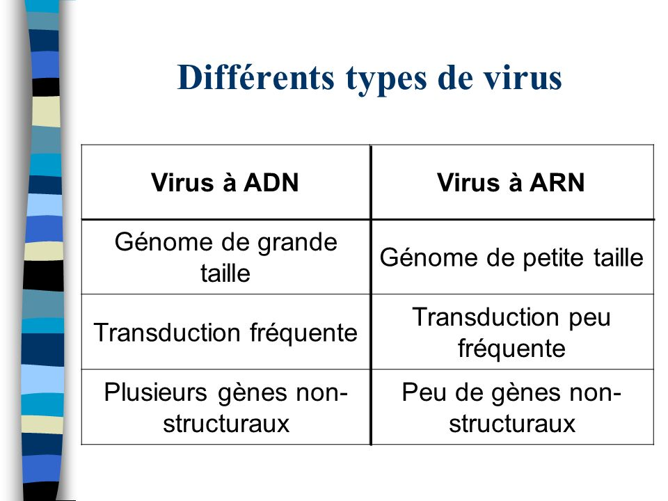 Différents types de virus Virus à ADNVirus à ARN Génome de grande taille Génome de petite taille Transduction fréquente Transduction peu fréquente Plu
