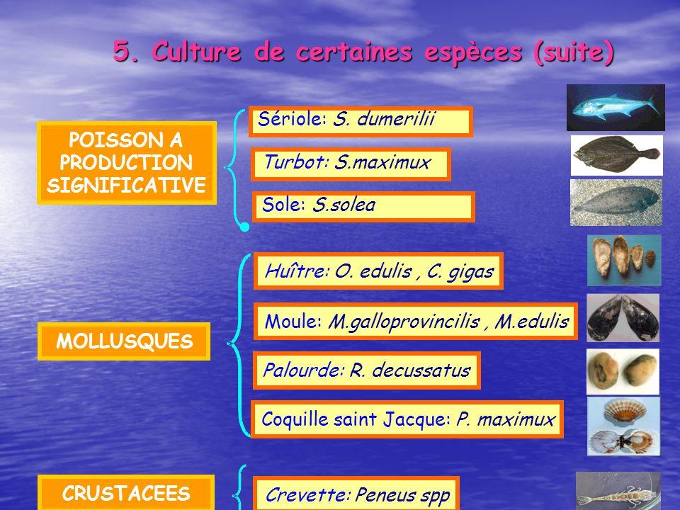 POISSON A PRODUCTION SIGNIFICATIVE Sériole: S. dumerilii Sole: S.solea Turbot: S.maximux MOLLUSQUES Huître: O. edulis, C. gigas Moule: M.galloprovinci