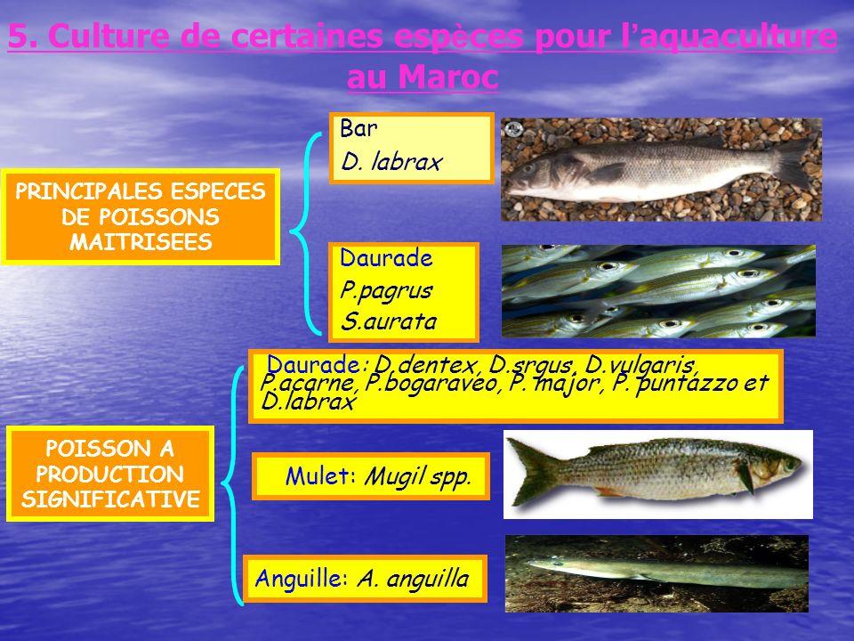 5. Culture de certaines esp è ces pour l aquaculture au Maroc PRINCIPALES ESPECES DE POISSONS MAITRISEES Bar D. labrax Daurade P.pagrus S.aurata POISS