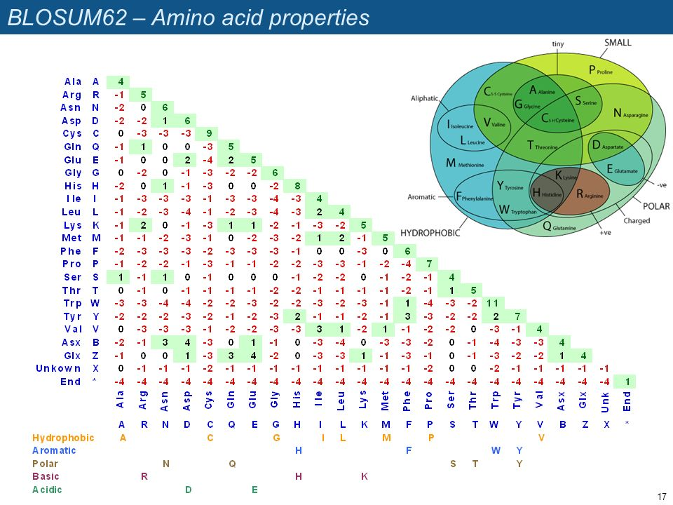 BLOSUM62 – Amino acid properties 17