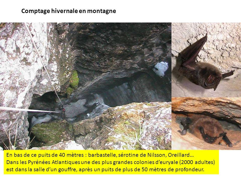 Comptage hivernale en montagne En bas de ce puits de 40 mètres : barbastelle, sérotine de Nilsson, Oreillard… Dans les Pyrénées Atlantiques une des pl