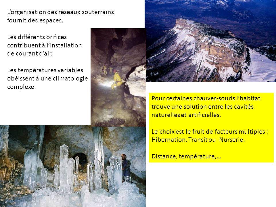 Lorganisation des réseaux souterrains fournit des espaces. Les différents orifices contribuent à linstallation de courant dair. Les températures varia