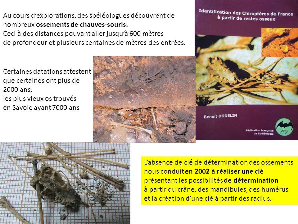 Au cours dexplorations, des spéléologues découvrent de nombreux ossements de chauves-souris. Ceci à des distances pouvant aller jusquà 600 mètres de p