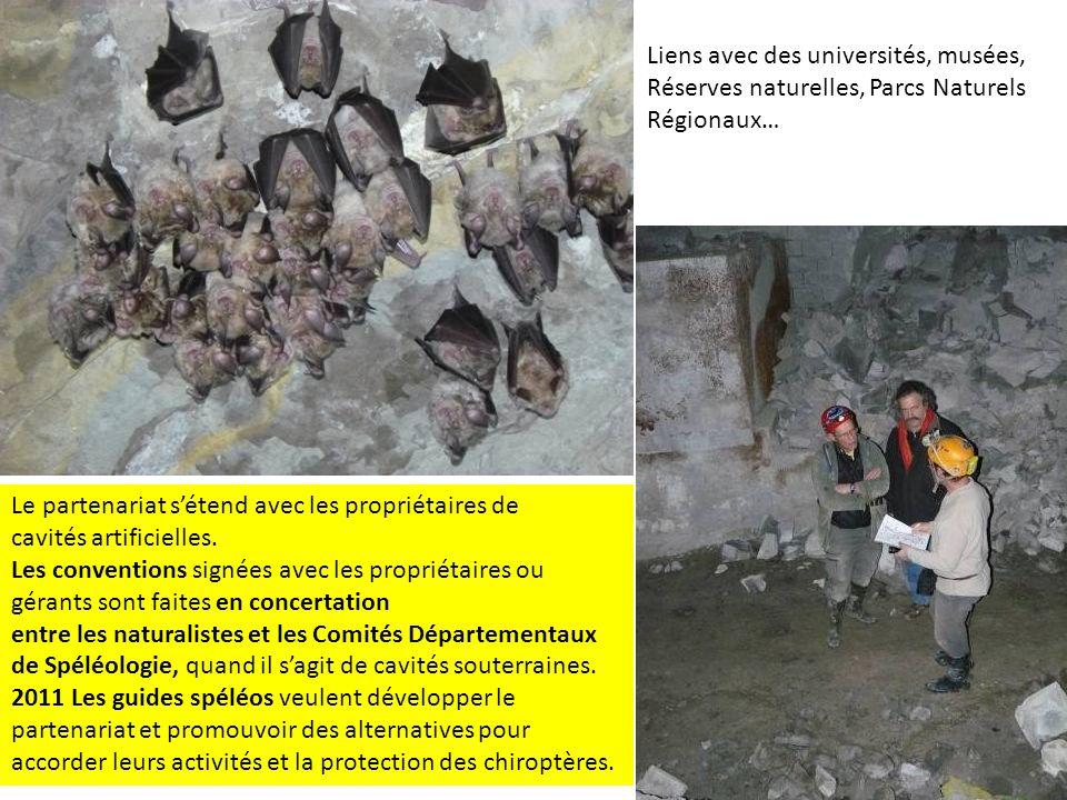 Participer à linventaire et la protection des nurseries en cavités souterraines.