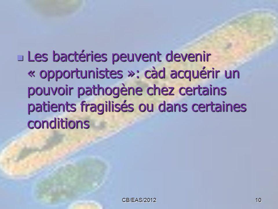 CB/EAS/201210 Les bactéries peuvent devenir « opportunistes »: càd acquérir un pouvoir pathogène chez certains patients fragilisés ou dans certaines c