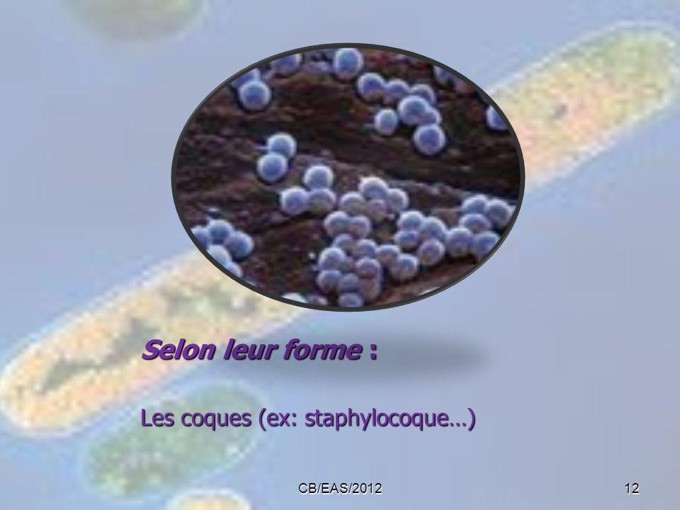 Selon leur forme : Les coques (ex: staphylocoque…) CB/EAS/201212