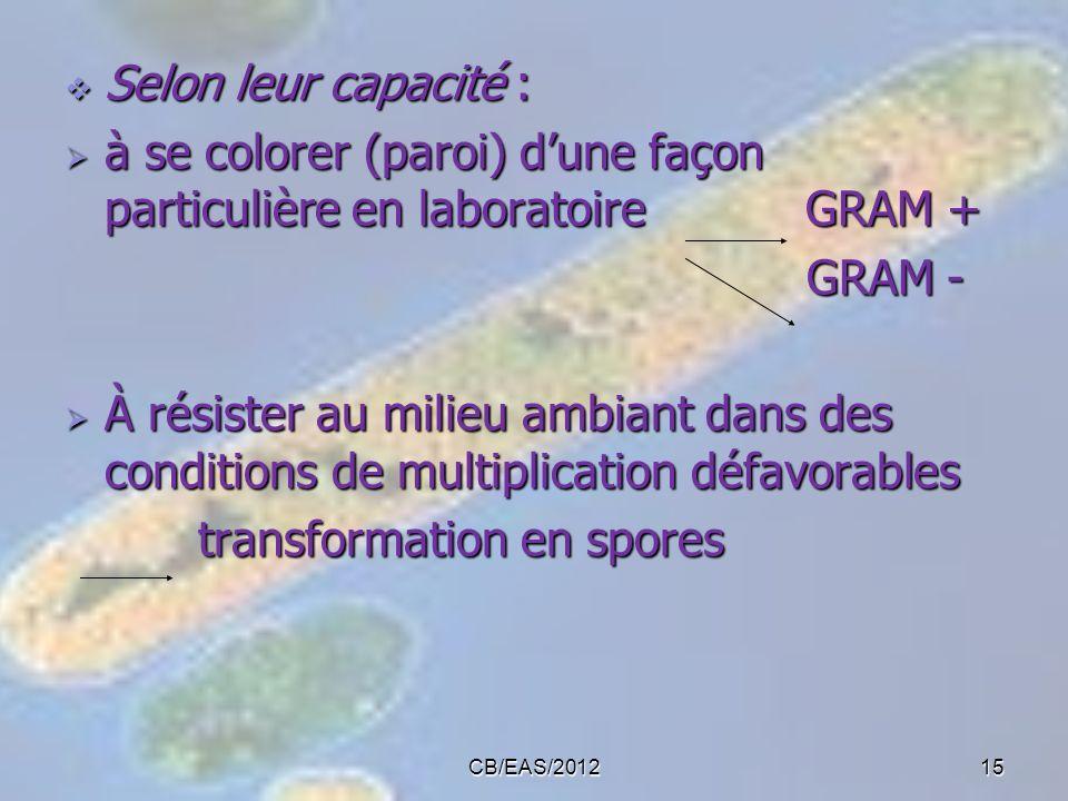 Selon leur capacité : Selon leur capacité : à se colorer (paroi) dune façon particulière en laboratoire GRAM + à se colorer (paroi) dune façon particu