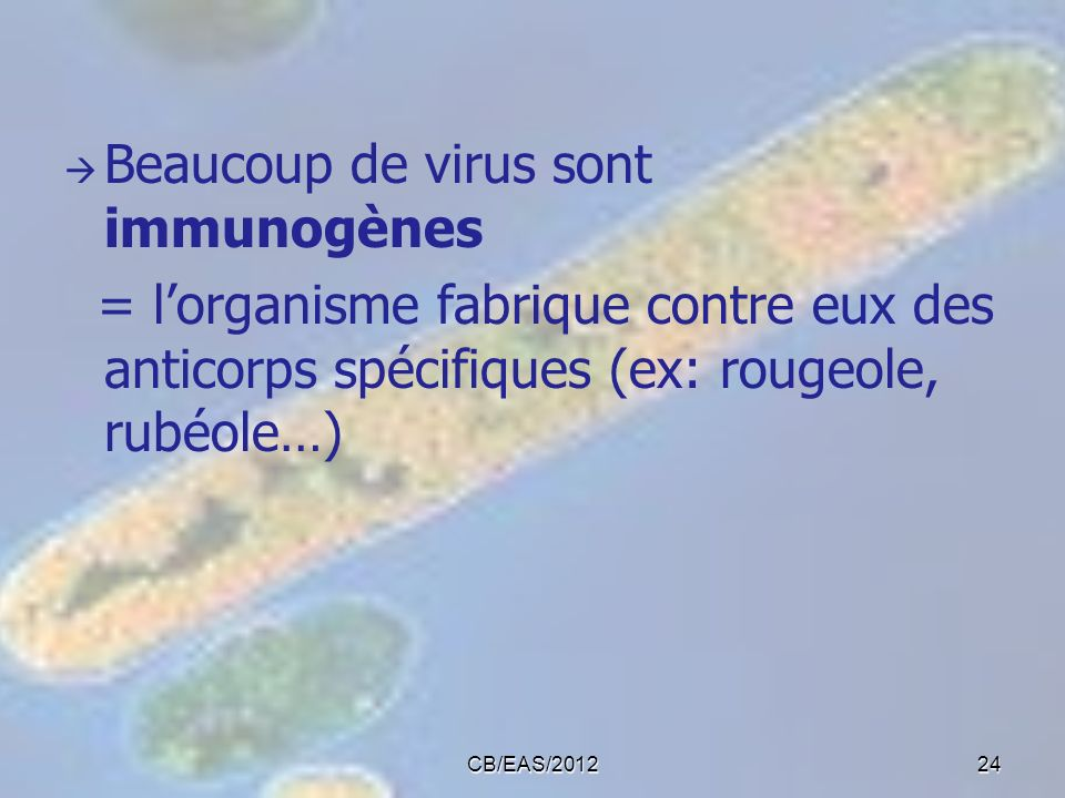 Beaucoup de virus sont immunogènes = lorganisme fabrique contre eux des anticorps spécifiques (ex: rougeole, rubéole…) 24CB/EAS/2012
