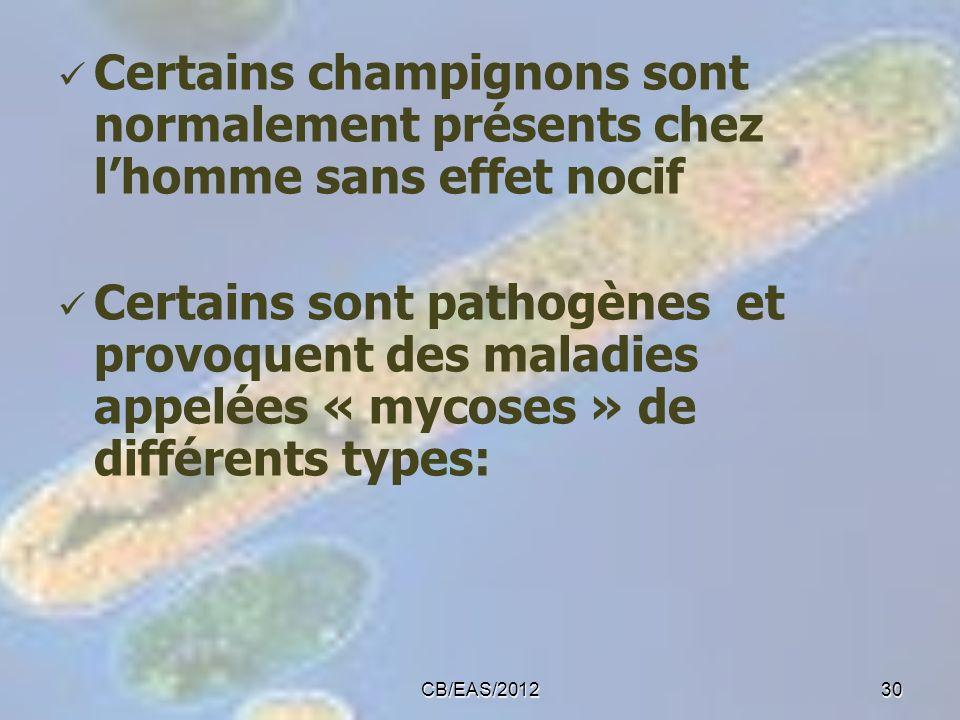 Certains champignons sont normalement présents chez lhomme sans effet nocif Certains sont pathogènes et provoquent des maladies appelées « mycoses » d
