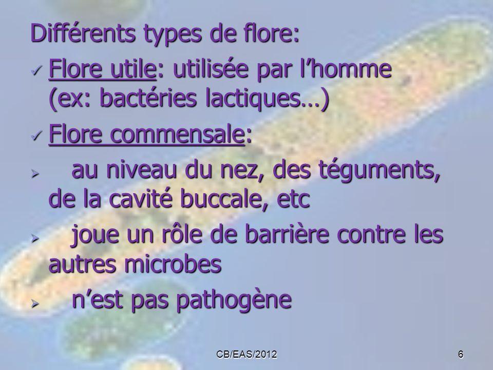 CB/EAS/20126 Différents types de flore: Flore utile: utilisée par lhomme (ex: bactéries lactiques…) Flore utile: utilisée par lhomme (ex: bactéries la