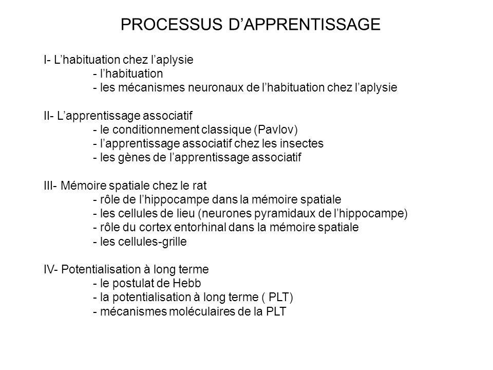 I- Lhabituation chez laplysie - lhabituation - les mécanismes neuronaux de lhabituation chez laplysie II- Lapprentissage associatif - le conditionneme