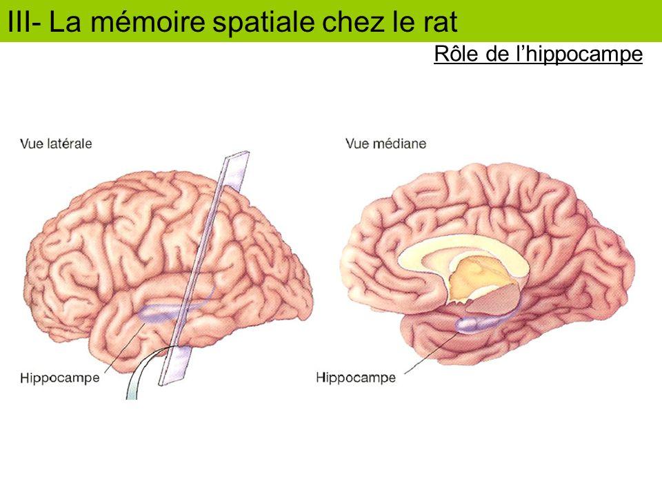 Rôle de lhippocampe III- La mémoire spatiale chez le rat