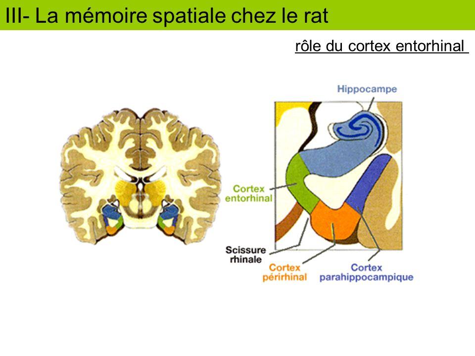 rôle du cortex entorhinal