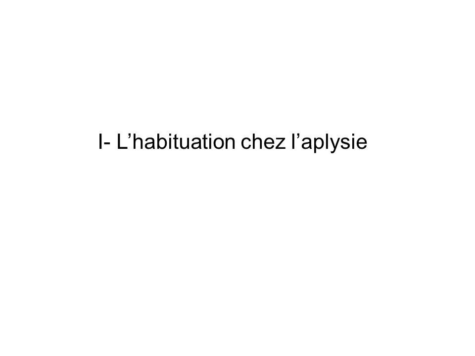 I- Lhabituation chez laplysie