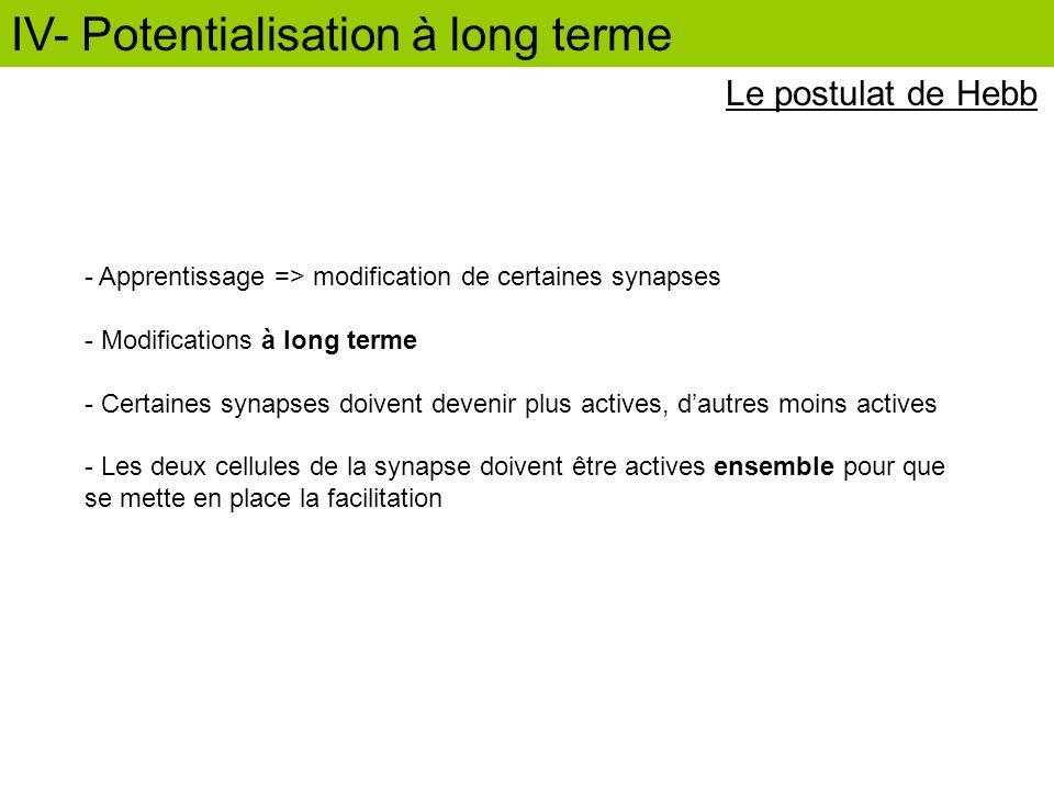 Le postulat de Hebb - Apprentissage => modification de certaines synapses - Modifications à long terme - Certaines synapses doivent devenir plus activ