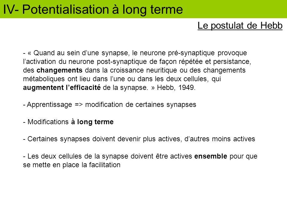 Le postulat de Hebb - « Quand au sein dune synapse, le neurone pré-synaptique provoque lactivation du neurone post-synaptique de façon répétée et pers