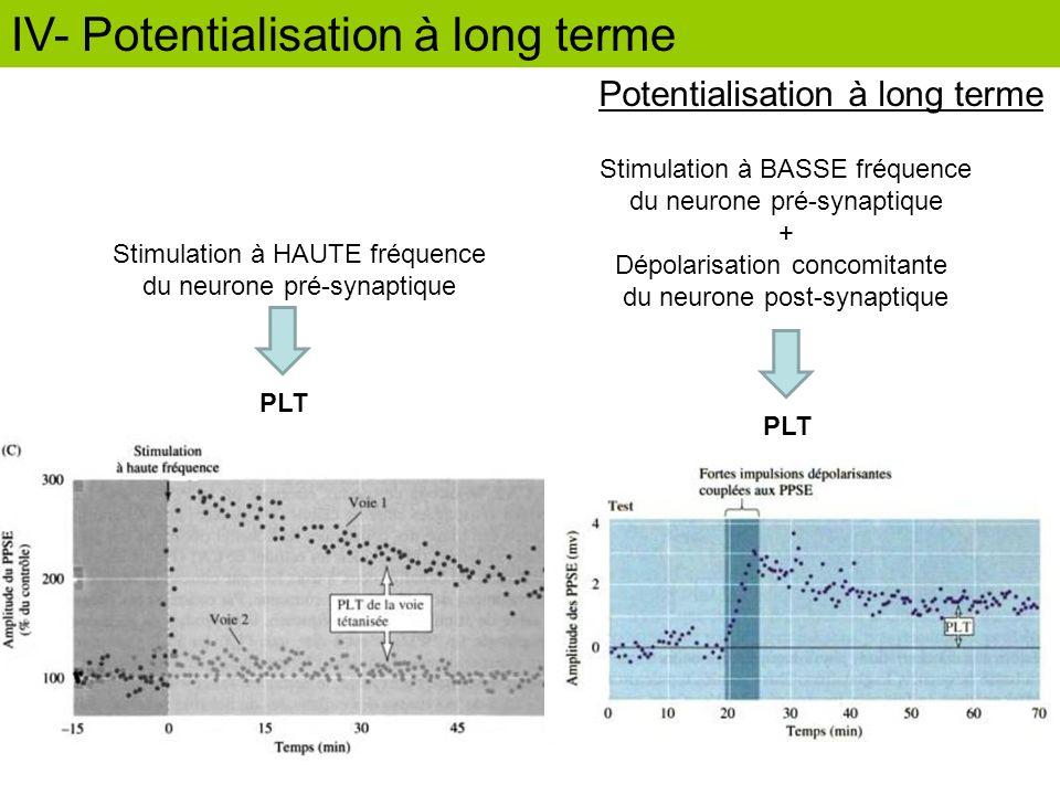 Potentialisation à long terme Stimulation à HAUTE fréquence du neurone pré-synaptique PLT Stimulation à BASSE fréquence du neurone pré-synaptique + Dé