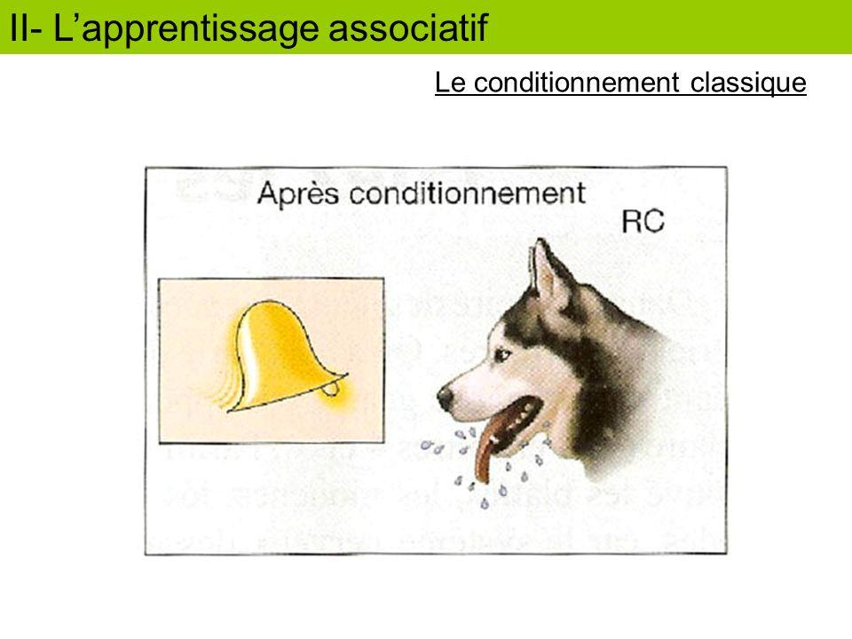 II- Lapprentissage associatif Lapprentissage associatif chez les insectes Avant conditionnement Stimulus conditionnel