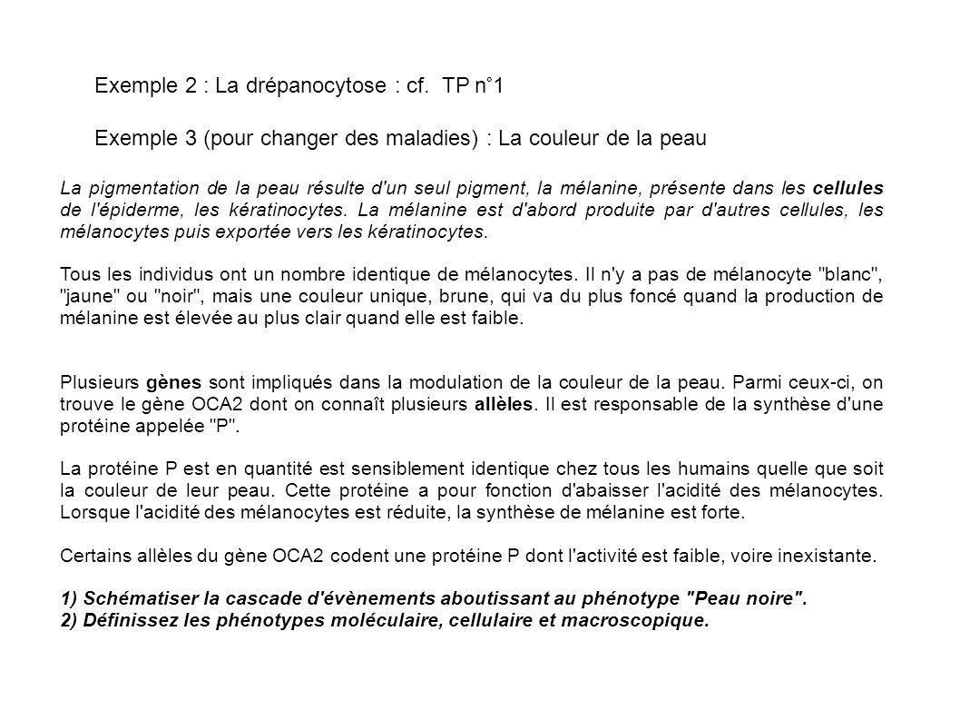 Exemple 2 : La drépanocytose : cf.