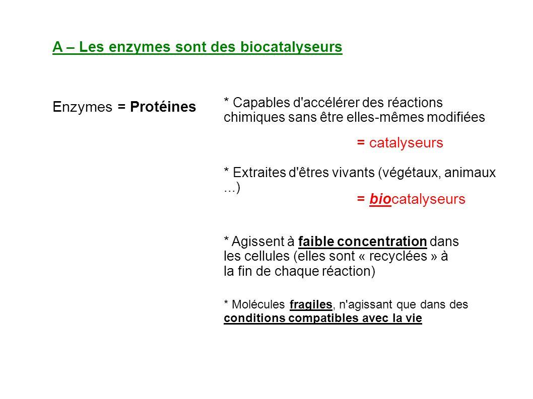 A – Les enzymes sont des biocatalyseurs Enzymes = Protéines * Capables d accélérer des réactions chimiques sans être elles-mêmes modifiées = catalyseurs * Extraites d êtres vivants (végétaux, animaux...) = biocatalyseurs * Agissent à faible concentration dans les cellules (elles sont « recyclées » à la fin de chaque réaction) * Molécules fragiles, n agissant que dans des conditions compatibles avec la vie