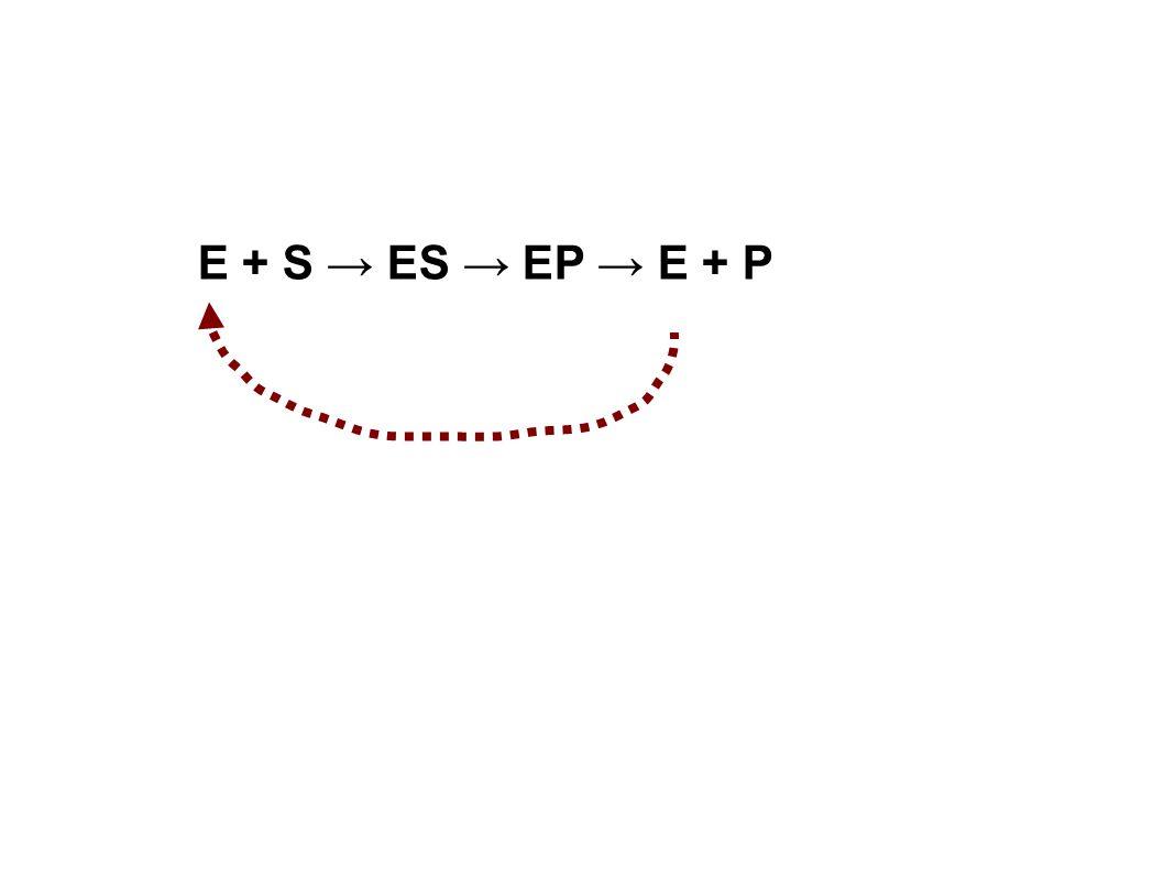 E + S ES EP E + P