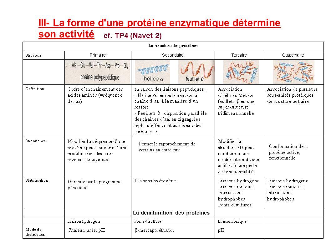 III- La forme d une protéine enzymatique détermine son activité cf.
