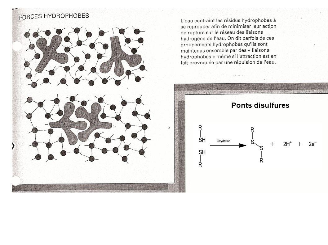 Ponts disulfures