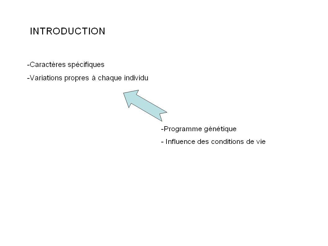 La diversité des protéines est à l origine de la diversité des caractères phénotypiques.